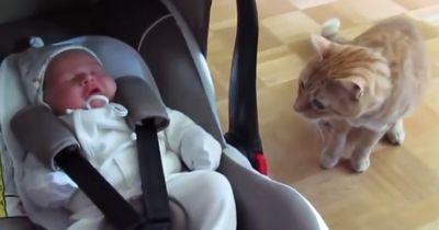 Wenn Katzen das erste Mal auf das neue Baby treffen