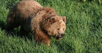 Nicht ganz das, was man sich unter einer Bären-Attacke vorstellt...