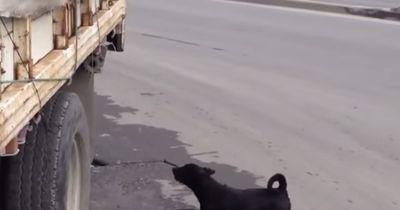 Hund versucht seinen Freund wiederzubeleben