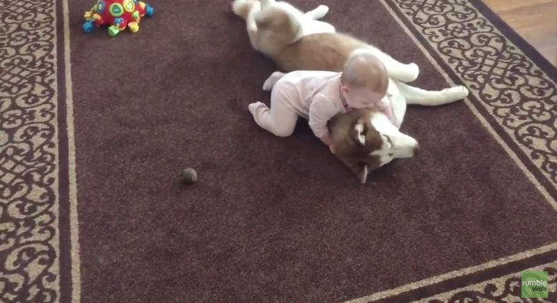 Dieser Hund macht alle Babysitter überflüssig!