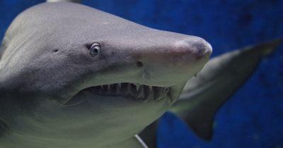 Techniker wird bei seiner Arbeit von einem Hai überrascht