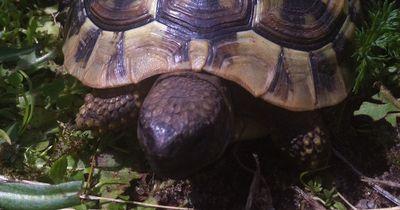 Du meinst Schildkröten wären langweilig?