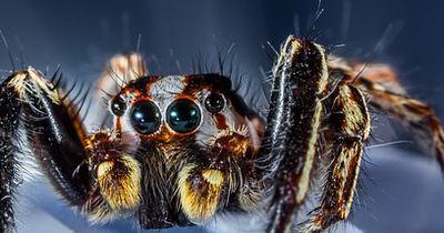 Niedliche Spinne