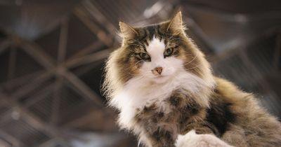 5 Tricks, die jeder Katzen-Besitzer kennen sollte!
