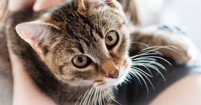 Diese besonderen Katzen brauchen eine besondere Fürsorge
