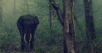 Wütender Elefant rast auf Tourist zu.....