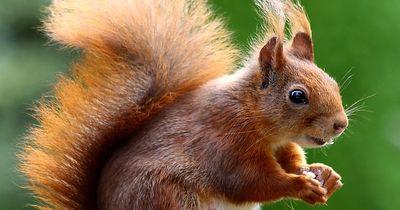 Eichhörnchen fällt ins Schwimmbad und was passiert?