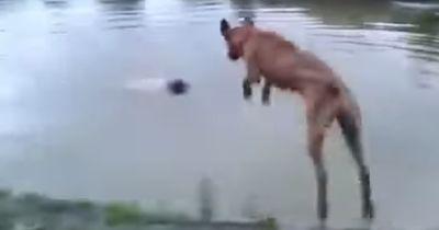 Als Herrchen unter Wasser geht, reagiert sein treuer Freund sofort