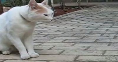 Katzen können reden - ich wusste es immer!