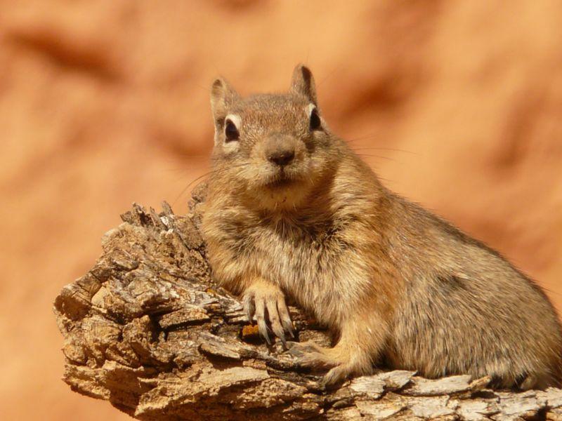 So habt ihr Eichhörnchen noch nie gesehen!