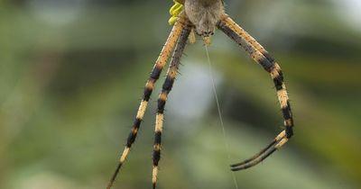 Die gefährlichsten Spinnen der Welt