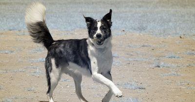Diese 7 Tricks sollte jeder Hunde-Besitzer kennen!