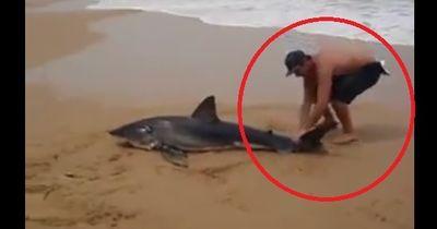 Mann packt wilden Hai an Schwanzflosse: Er riskiert sein eigenes Leben!