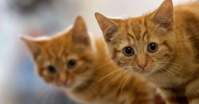 7 Dinge, die du noch nicht über Katzen wusstest!
