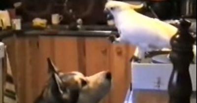 Hund und Vogel sind die besten Freunde!