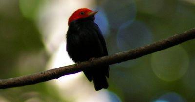 Dieser kleine Vogel beherrscht den Moonwalk