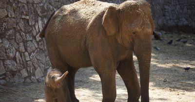 Elefanten und ein ganz besonderer Kaffee