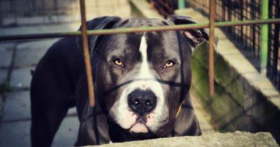 5 Hunde, die im Tierheim sterben werden...