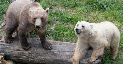 Cappuccino-Bären: Lustiger Name, ernster Hintergrund