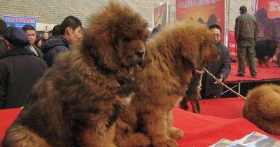 Hunde, von denen du nicht wusstest, dass sie existieren!