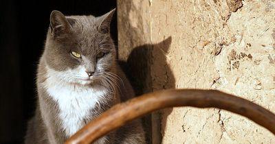 Dieses Problem kennt wohl jeder Katzenbesitzer!