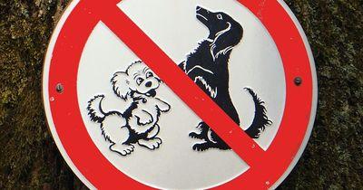 Die skurrilsten Hunde-Gesetze aller Zeiten