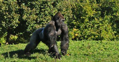 Die 5 tödlichsten Affenarten