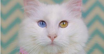 6 besondere Katzenaugen