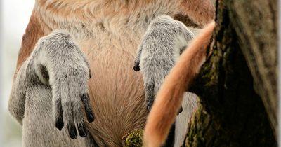 10 bizarre Tiere, die tatsächlich existieren!