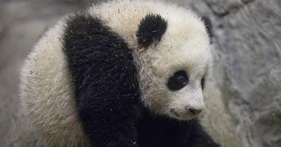 Diese 5 Tiere zählen zu den bedrohten Arten dieser Welt!