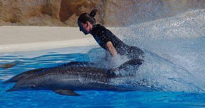Delfine und Menschen