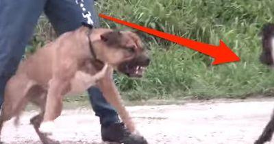 Haben wir einen illegalen Hundekampf entdeckt?