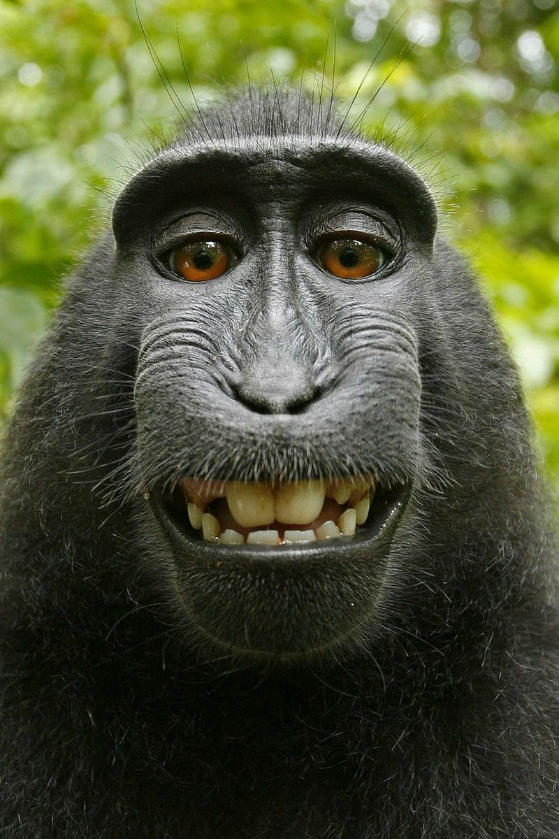 Schön Haustier Affe Das Beste Von