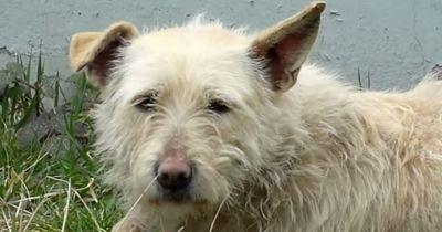 Dieser Hund entkam mehrfach brutalen Tierfängern