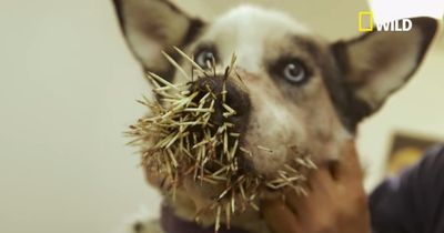 Dieser Hund wollte nur schnüffeln - die Folgen sind dramatisch