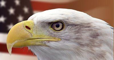 Adler sind die Könige der Lüfte