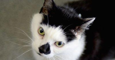 Deine Katze beißt oder kratzt dich manchmal einfach so? Dann solltest diese 5 Ratschläge befolgen!