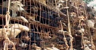 Die Hundefleischmafia