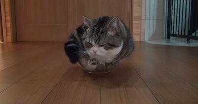 Mission Impossible? Nicht für diese Katze