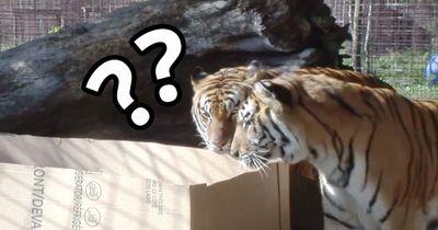 Sind Wildkatzen wirklich so anders als unsere Hauskatzen?