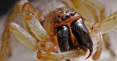 Achtung! Invasion der Spinnen