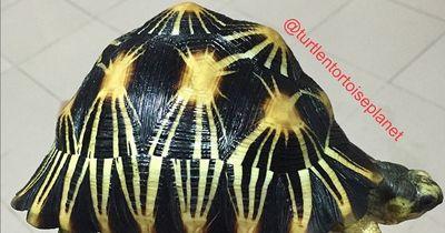 Die außergewöhnlichsten Schildkrötenpanzer!