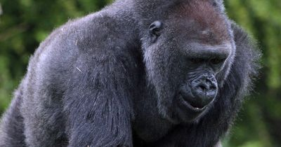 Diese 5 Tiere sind echte Lebensretter!