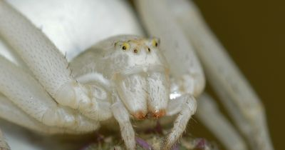 Darum sind Spinnen eigentlich total süß!