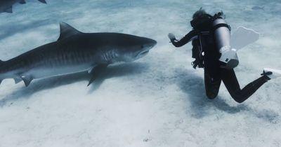 5 unglaubliche Hai-Aufnahmen!