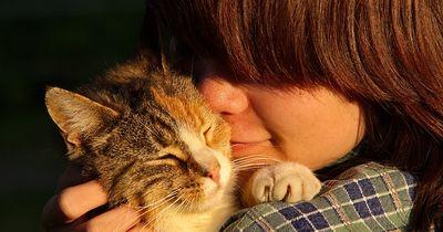 Haustiere wecken Herrchen oder Frauchen