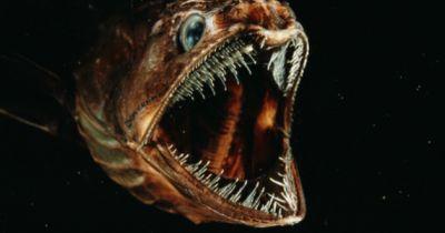 Strange Creatures - Unheimliche Monster