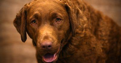 5 Dinge, die ihr mitbringen solltet, wenn ihr einen Hund haben wollt.