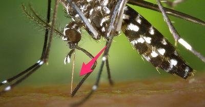 Neue Wunderwaffe gegen Mücken ist auf den Markt gekommen