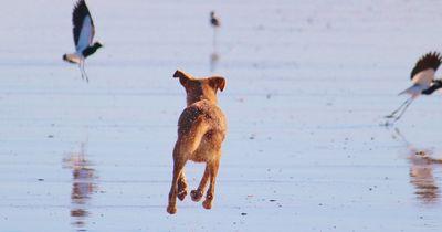 Warum Hunde nicht alleine Zuhause bleiben wollen